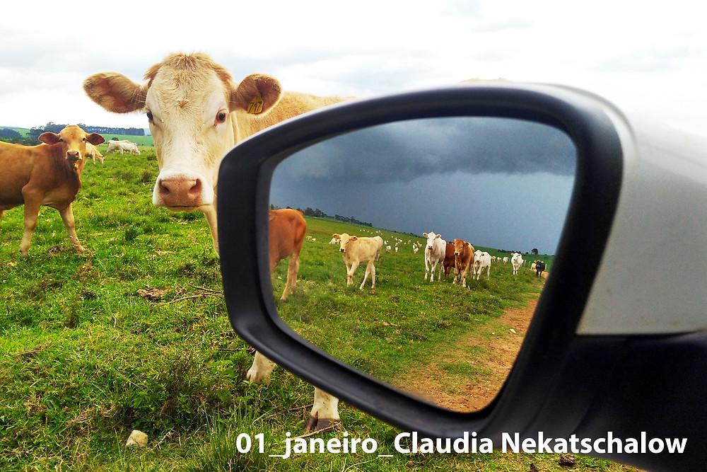 Foto vencedora do 1°lugar