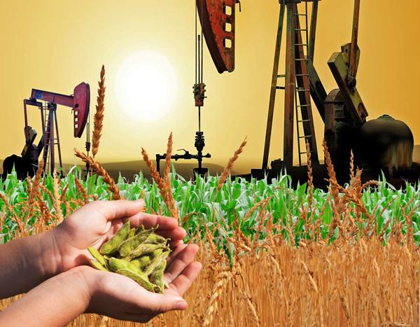 FAO: Preços globais de commodities alimentícias se recuperam em agosto.
