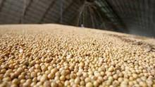 Soja opera em campo misto nesta 5ª em Chicago e espera boletim do USDA de exportações