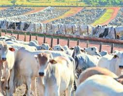 Média diária exportada de carne bovina in natura registrou recorde histórico em outubro