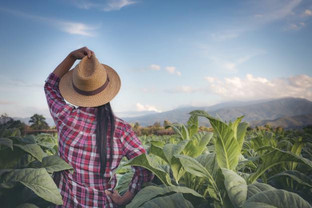 Comissão aprova projeto que prioriza mulheres microempreendedoras na concessão de crédito rural