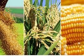 Conab aponta índice de plantio de arroz, milho e soja maior que período anterior