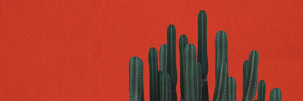 cactus-red-wall-2.jpg