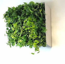 Small plant wall