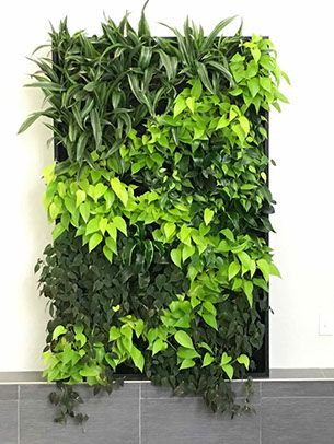 Weather Nation green wall