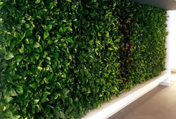 Lakewood law office plant wall