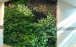 Living wall for Johnson and Wales