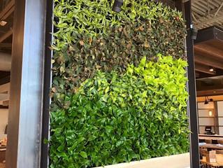 New Green living wall Colorado Springs