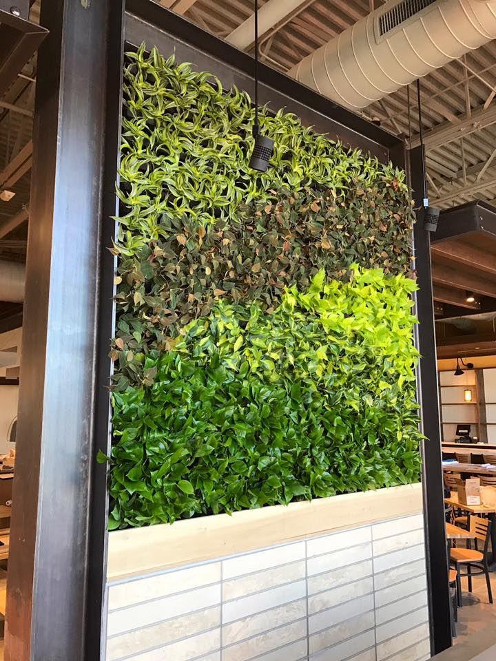 Salsa Brava plant wall