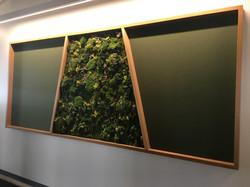 Boulder Colorado Moss wall