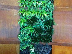 Guard & Grace Living green wall