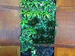 Guard & Grace Living green wall