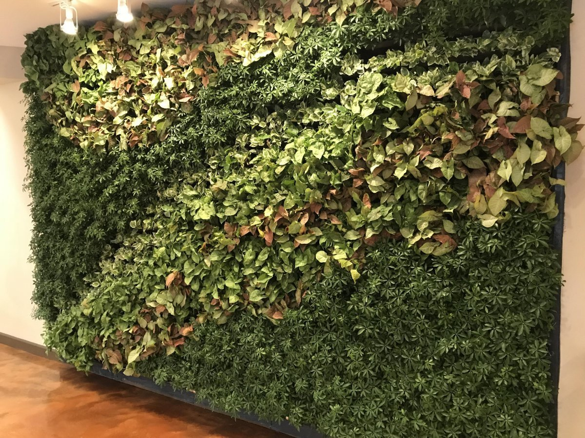 Light Shade green living wall