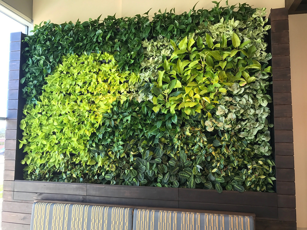 Urban egg green living wall