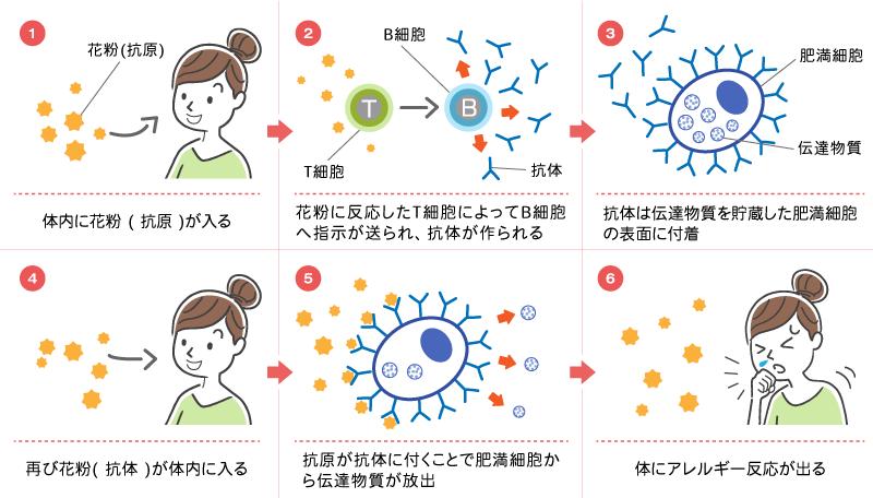 しゅろのき内科クリニック 花粉症