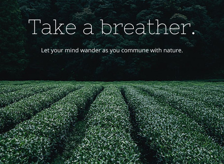 The Power of Nature on Your Mood
