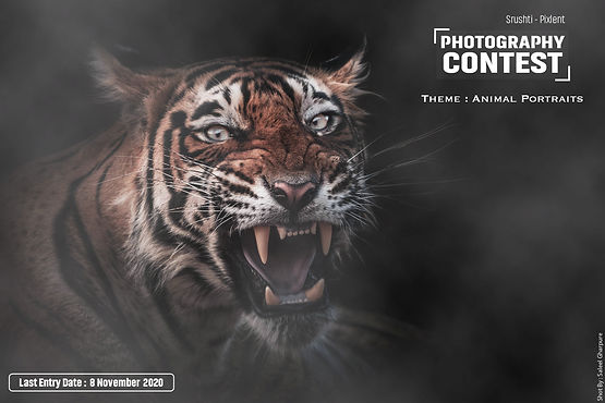 Animal-Portraits.jpg
