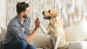 Pets: eles também estão descendo pro play.