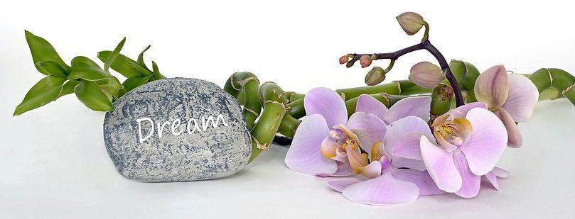 orchid-2115261__480.jpg