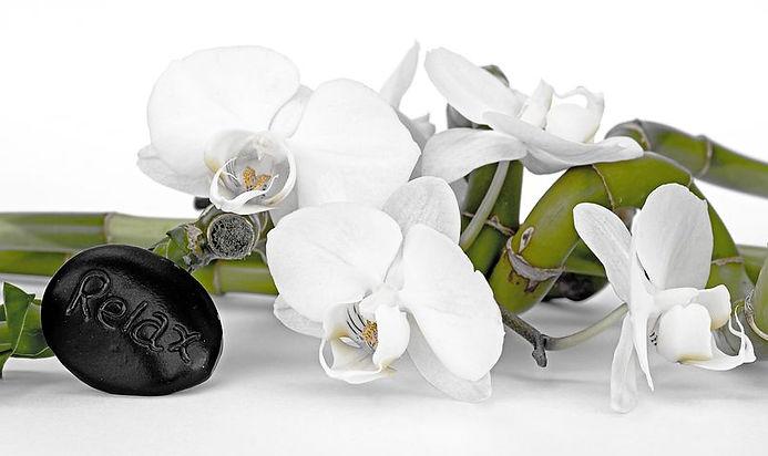 orchid-2115257__480.jpg