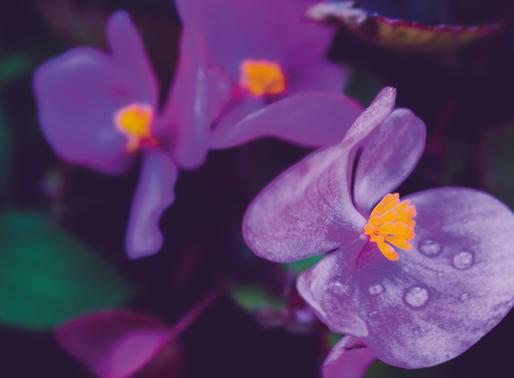 A flor e o jardineiro
