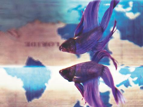 Um peixe fora d'água mesmo dentro dela