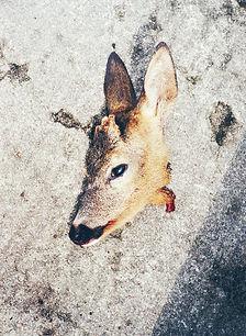23-Deer_2.jpg