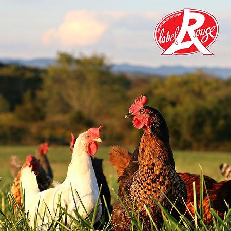 poulet-licques-bassecour-label-rouge.jpg