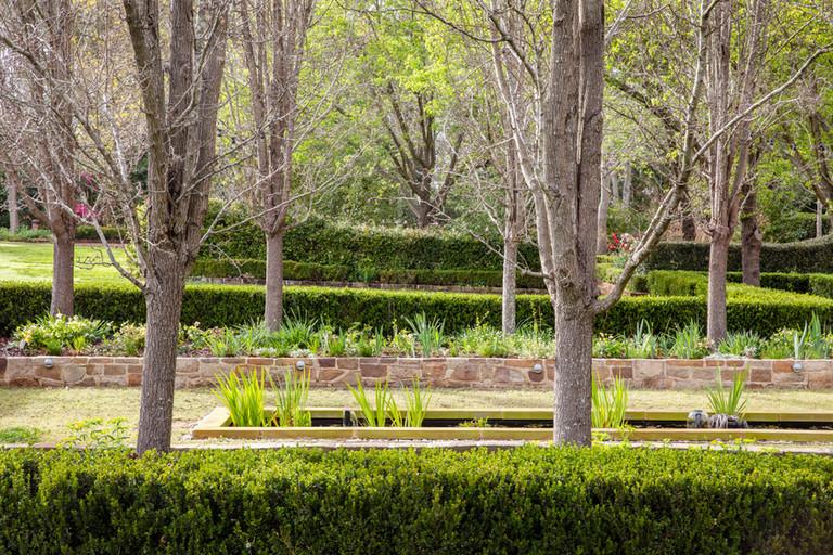 chanticleer trees.jpg