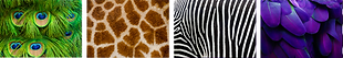 GROUP TEXTURES 4KIND.png