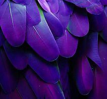 630041298 Macaw Bird.JPG