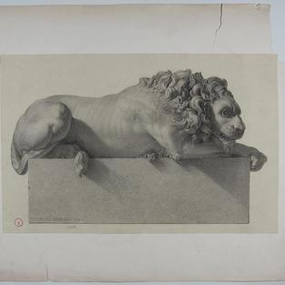 Estudio de león