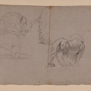 Estudios de león