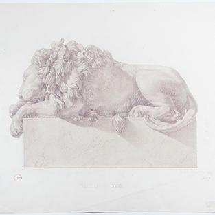 Estudio de león durmiente