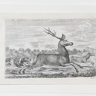 Cacería de ciervos