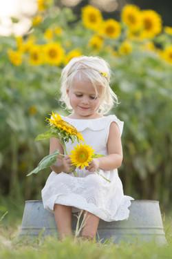 2017 Sunflower Brown-1249