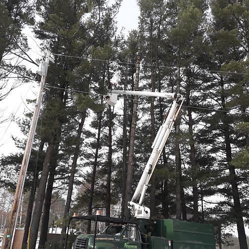 Wasaga Beach Pine Tree Removals & Pruning