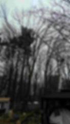 Adamson Tree Experts / Tree Service