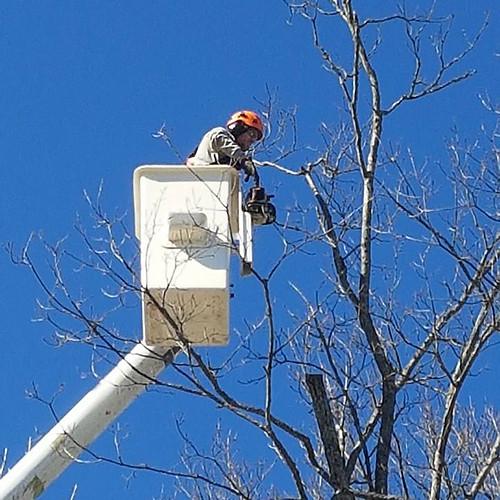 Huntsville, Ontario Tree Removals