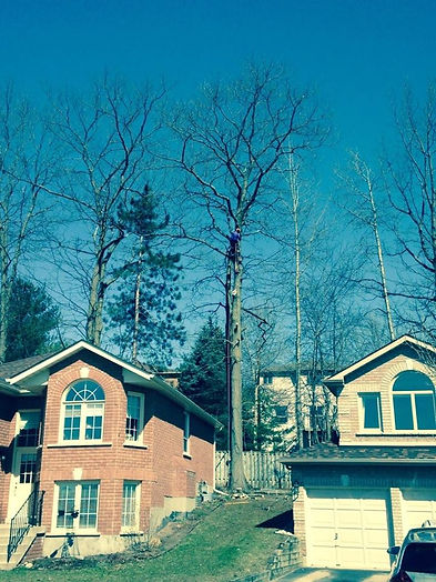 Adamson Tree Experts / Tree Service / Tree Pruning