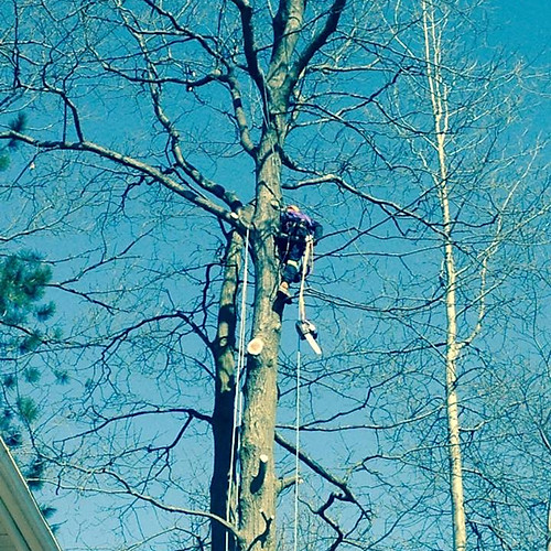 Misc Tree Pruning / Tree Removals