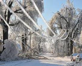 Adamson Tree Experts / Tree Service / Storm Damage