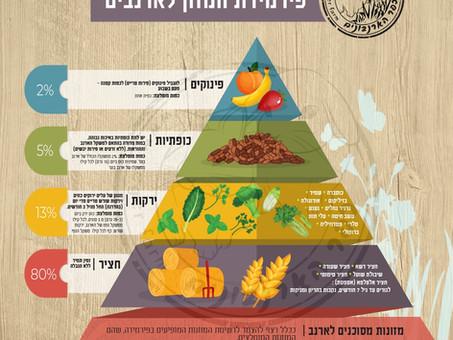 פירמידת המזון לארנבים- כל מה שצריך לדעת על האכלתם