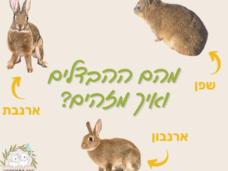 שפן, ארנבת, ארנבון-מהם ההבדלים ואיך מזהים?