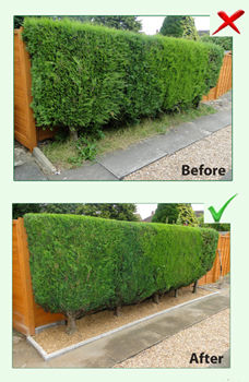 Before and After Hedge Cutting