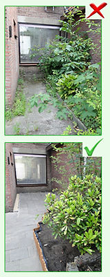 Before and After Garden Tidy