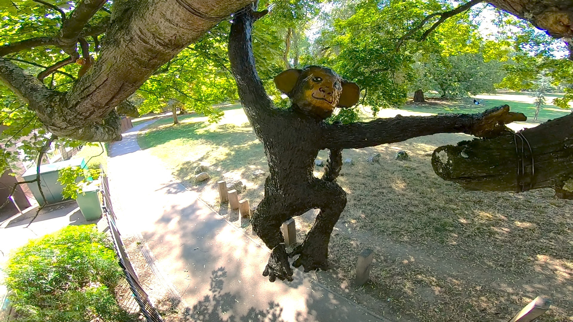 hanging brown monkey.jpg