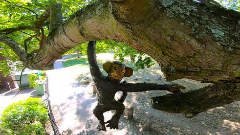 hanging brown monkey 2.jpg