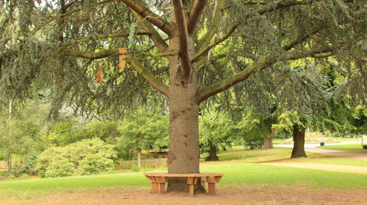 Pine Tree Honour Tree