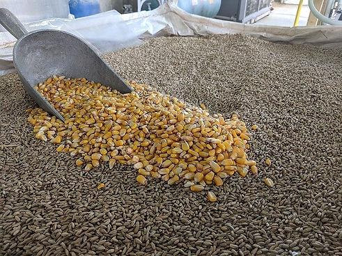 corn-3810163_640.jpg